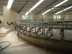 ROTARY MILKING PLATFORMS